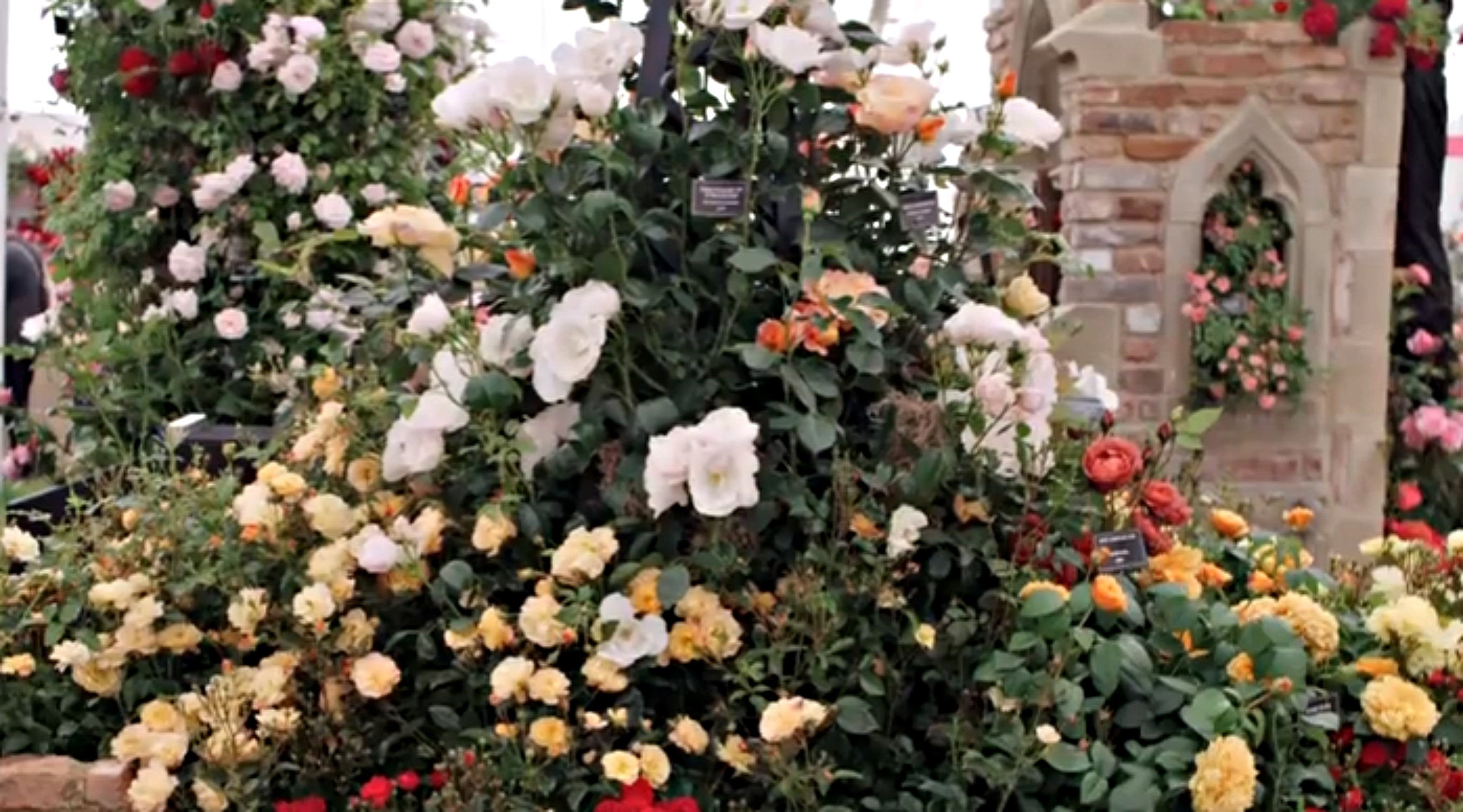 Festival of Roses – RHS Hampton Court Palace Flower Show