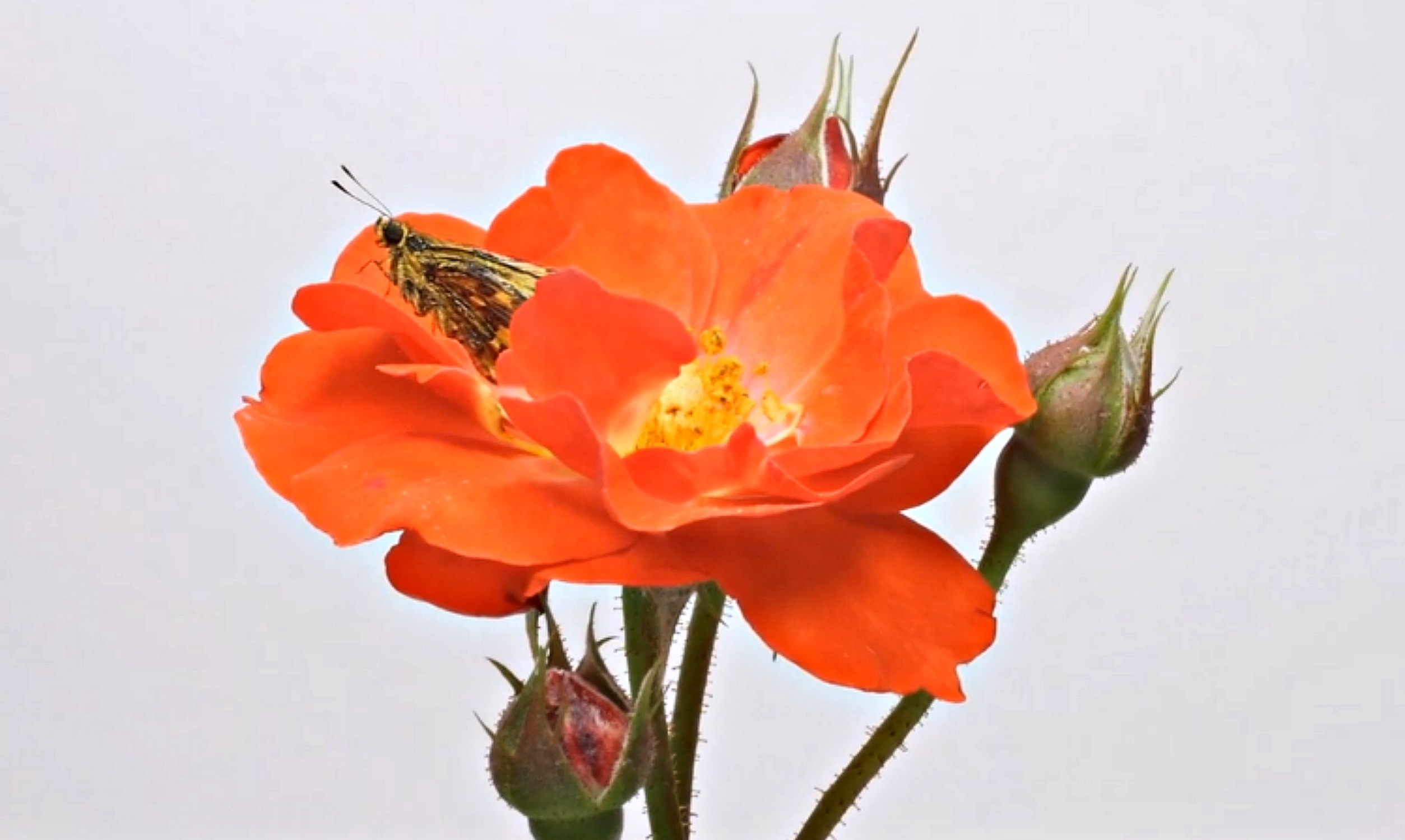 Umwelt – Flower Time Lapse