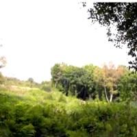 RHS Garden Bridgewater - Finding Our Fifth Garden