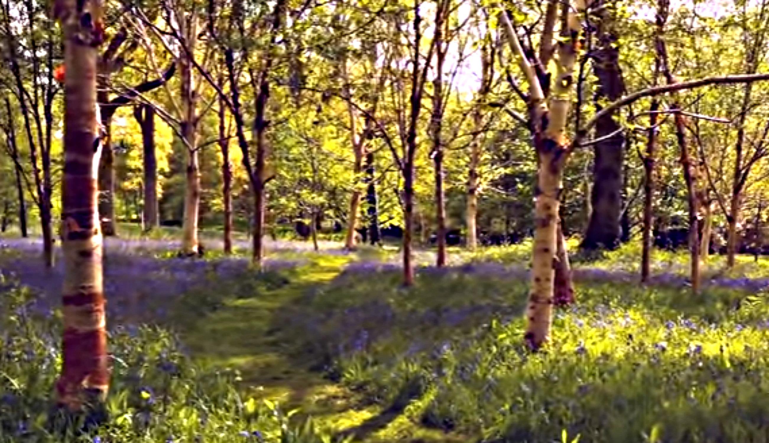 Spring at Wakehurst, Kew's garden in Sussex