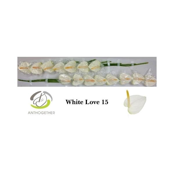 ANTH A WHITE LOVE (GM-16795) - FloraXchange