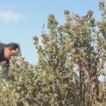 Flore en Thym au JT TF1 du 27 avril 2017 : la vidéo