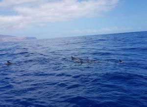 Ruf des Meeres - Ozeanisches Bewusstsein - gomera retreat mai 2019