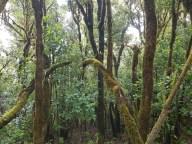 Nationalpark Garajonay La Gomera Seminarreise mit Florence Zumbihl
