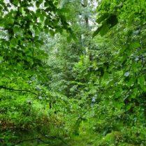 Natur - Auftanken im Wald Florence Zumbihl