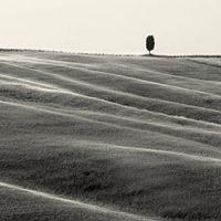 Tuscany - b&w landscape