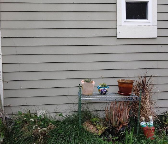 Outside in the backyard