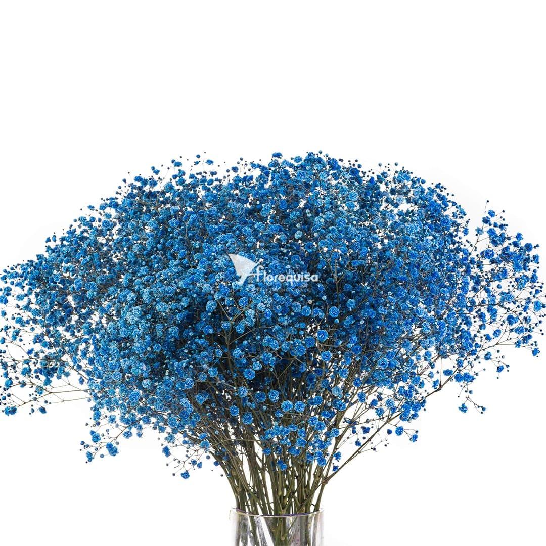 Blue Gypsophila by Florequisa Flower Growers