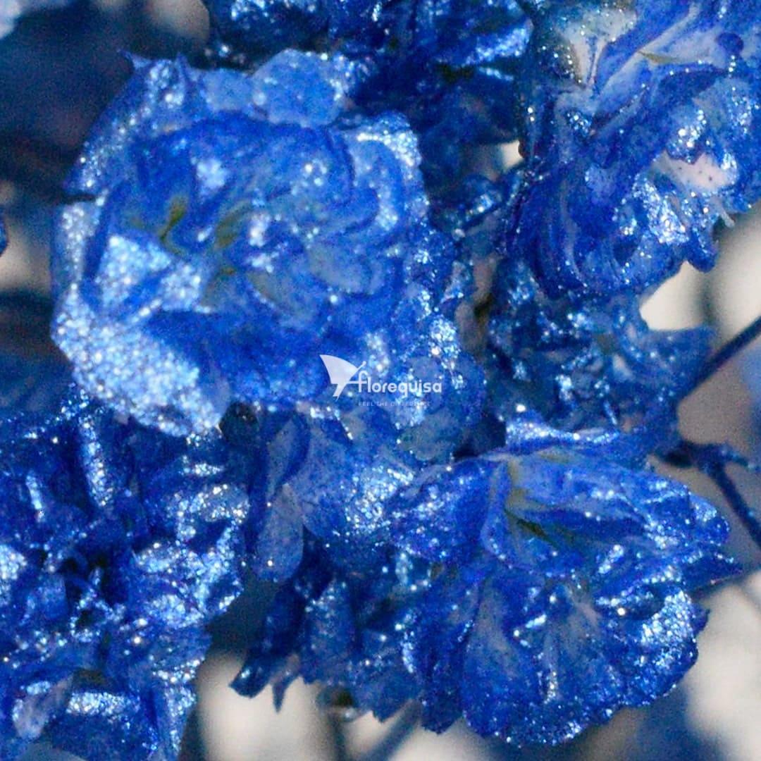 Gypsophila Metallic Blue by Florequisa Flower Growers