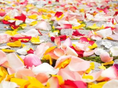 DECORACIONES-FIN-love-love-wallpaper-petals-37525