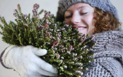 Beneficios de las flores y plantas