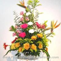 P5 - Flores primaverales de temporada