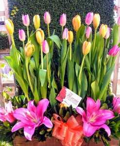 Hermosa jardinera de tulipanes EN300
