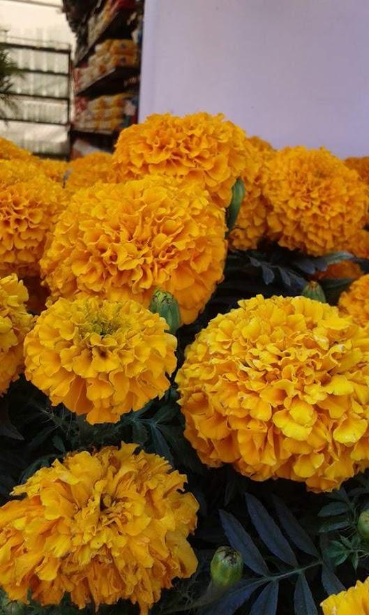 Imagenes de flores amarillas para el fondo de tu celular