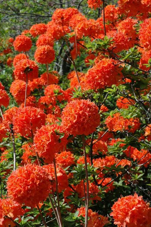 Imagenes de flores para poner de fondo de celular