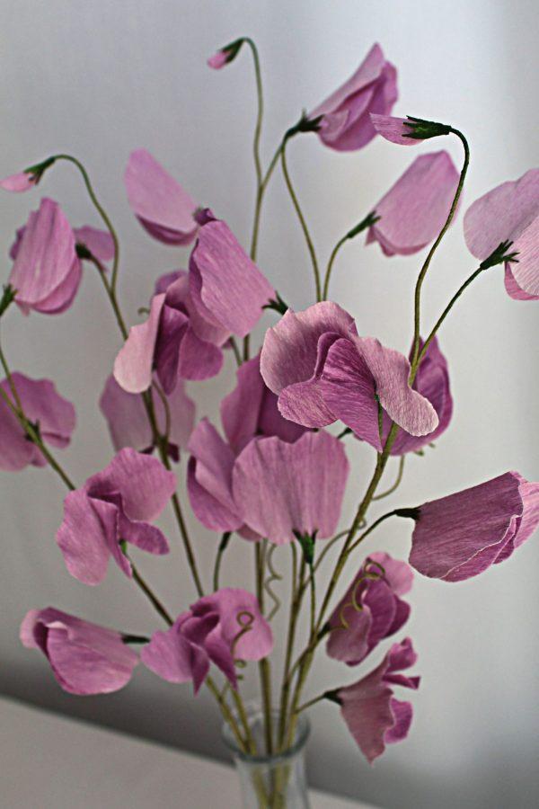 light purple sweet peas