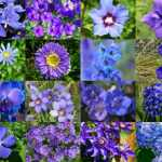 Top 55 Types Of Blue Flowers With Names And Pictures Florgeous