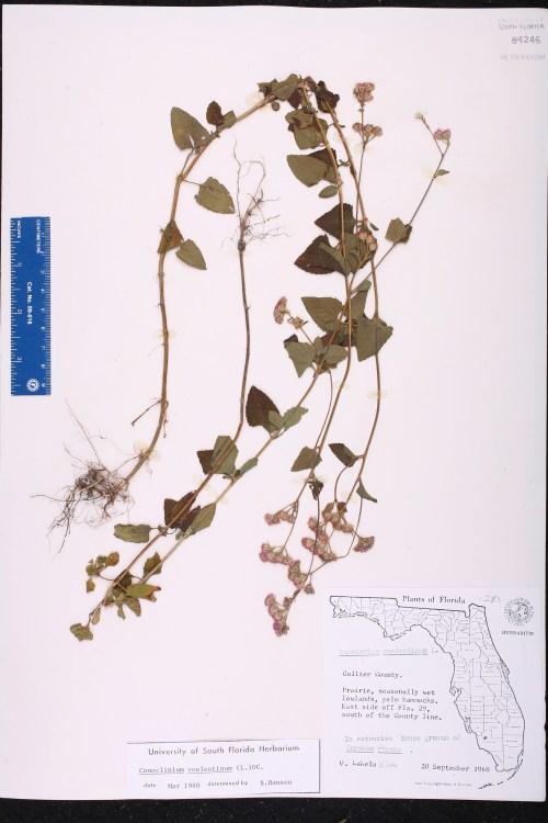 via USF Herbarium