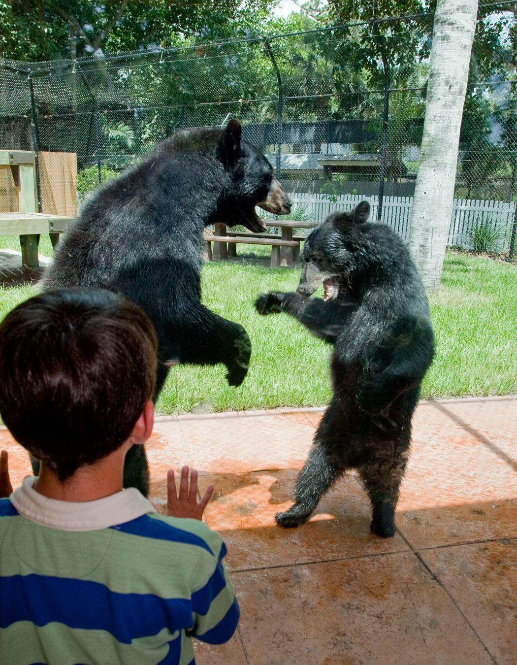 Naples Zoo Animal sanctuary and botanical garden