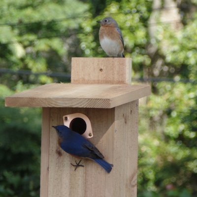 Watch Live Nestbox Activity from 4 Nestboxes!
