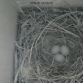 Follow Nest Box Activity on our Liv...