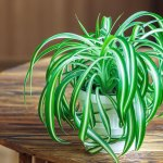 7 Great Plants to Keep in Your Florida Home