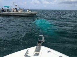 Investigators Recover Helicopter that Crashed in Bahamas