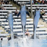 SeaWorld Orlando reopen with masks, temperature checks