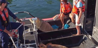2 rescued sea turtles released in Florida after recovery