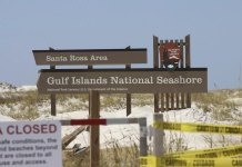 Panhandle shorebirds thrive in aftermath of Hurricane Sally