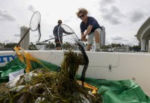 Amid red tide outbreak, Florida beckons visitors to beaches