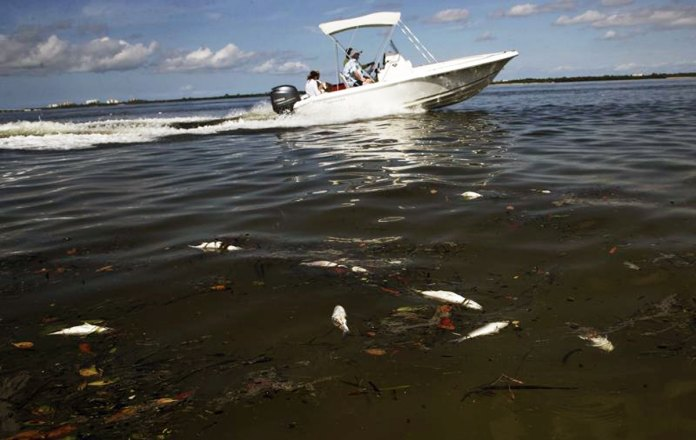 Red tide limits harvesting at aquatic farms in Tampa Bay