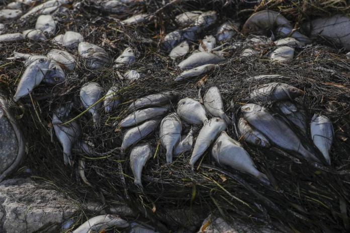 Protesters seek help dealing with fish-killing red tide