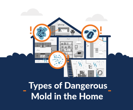 Types of Dangerous Mold in the Home and How to Protect Against it