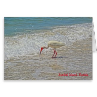 white_ibis_wading_bird_on_sanibel_island_florida_stationery_note_card-ra76651bab8954a56b6cb6d89e892b38e_xvua8_8byvr_325