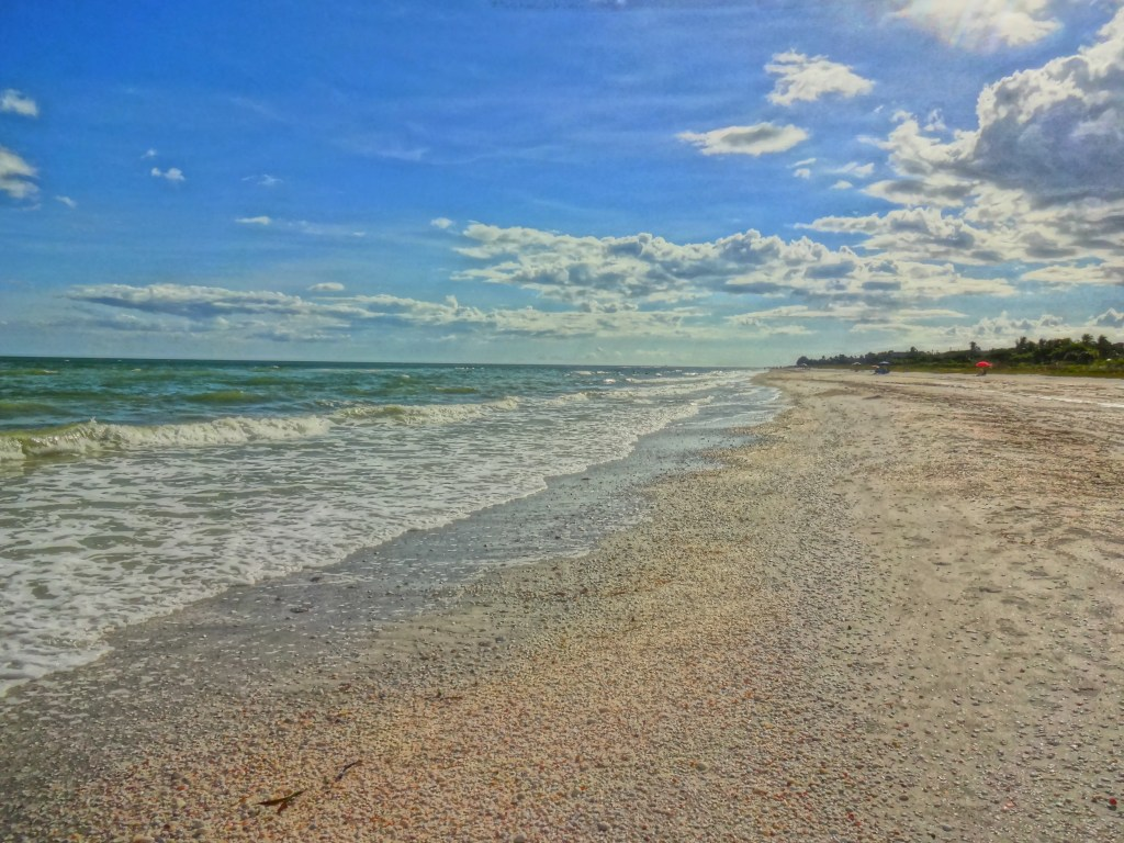 A Sanibel Island Beach Covered with Sea Shells