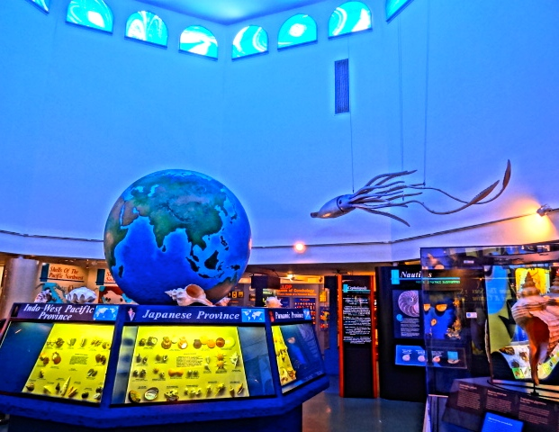 The Great Hall Inside Bailey Matthews Shell Museum Displays Exotic Shells from Around the World