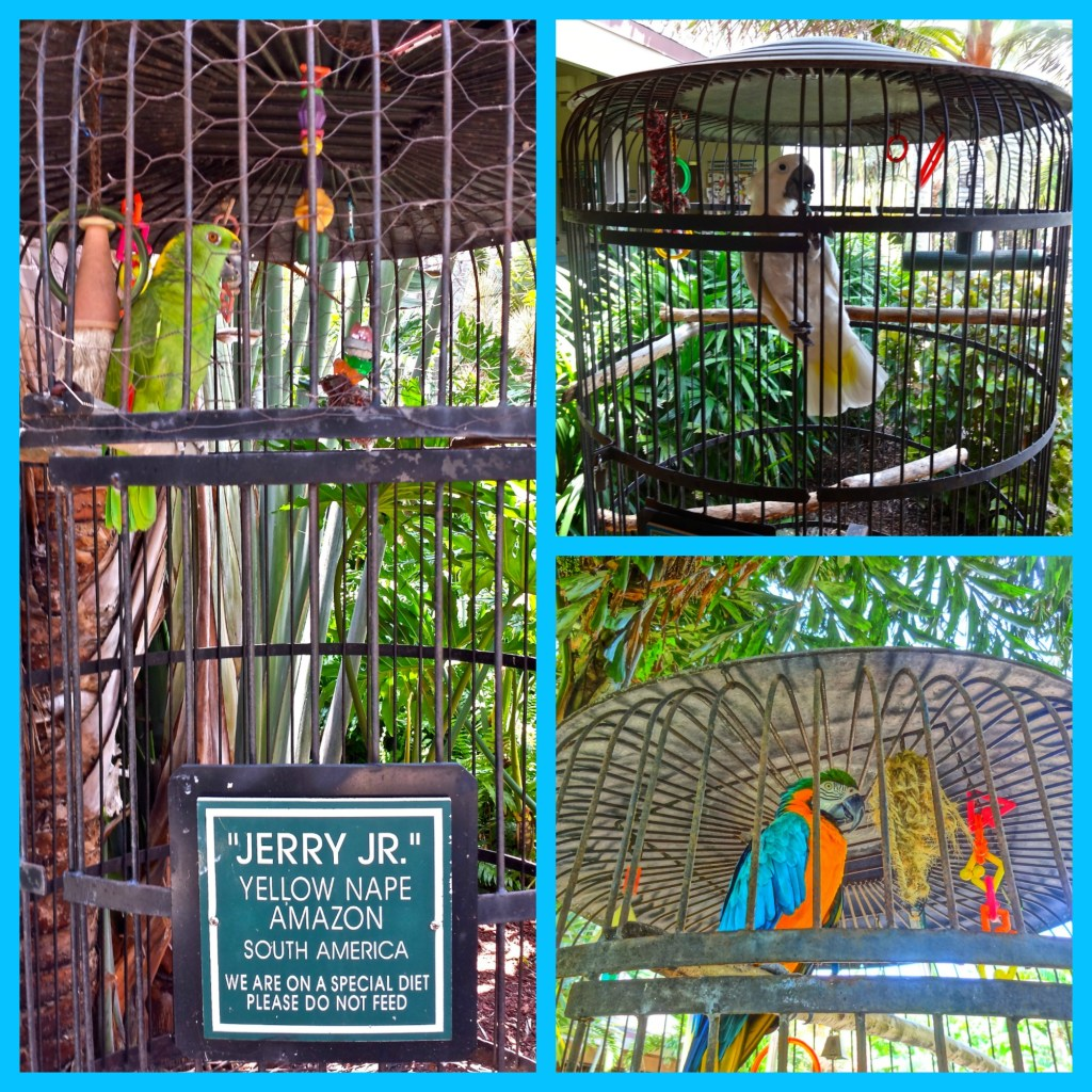 Tropical Birds at Jerry's Foods on Sanibel Island