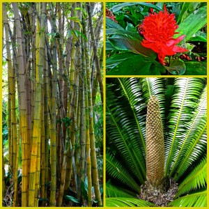 Tropical Plants at Harry P. Leu Gardens