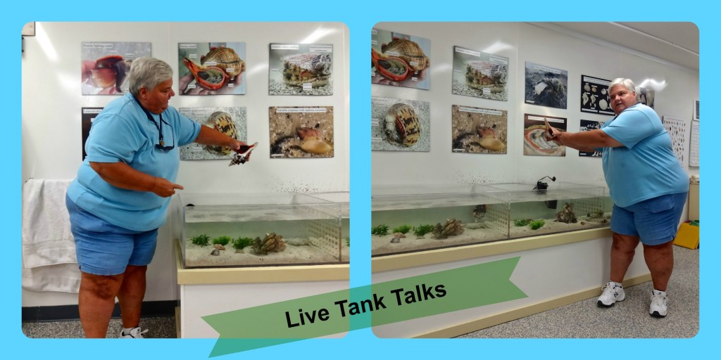 Live Tank Talk at Bailey Matthews Shell Museum on Sanibel Island Florida