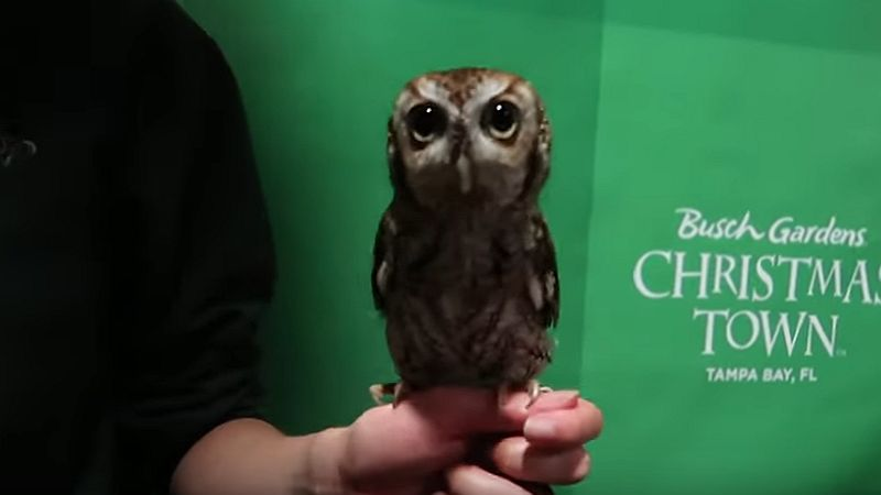 bg xmas town owl header