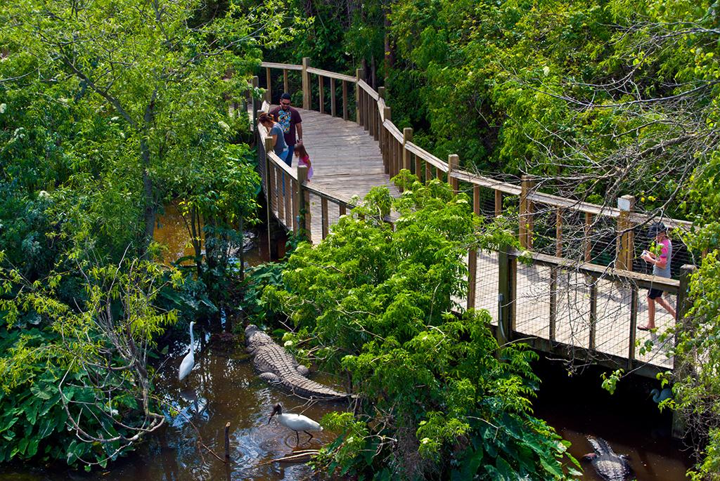 Gatorland  Florida Hikes