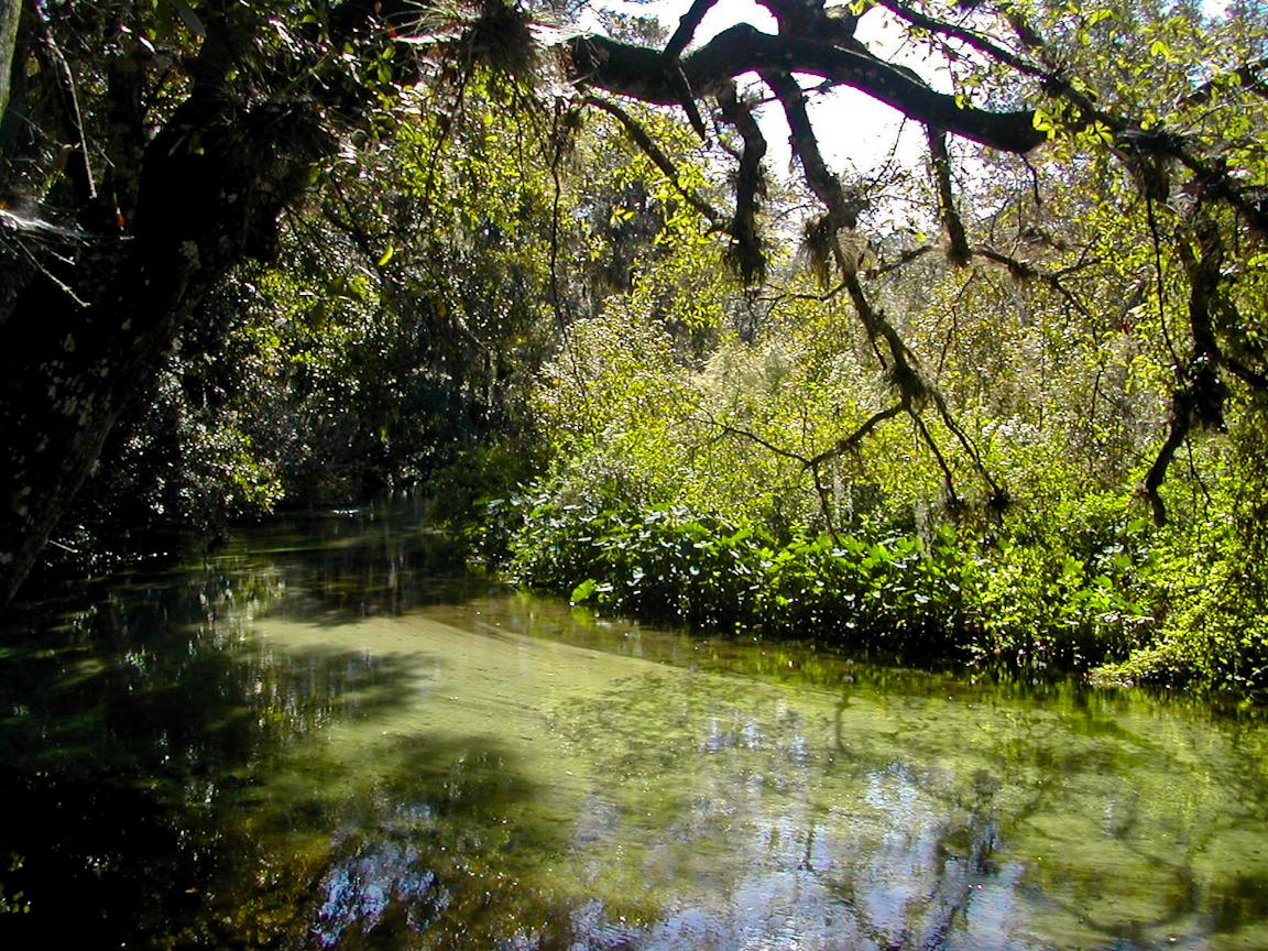 Rock Springs Run State Reserve  Florida Hikes