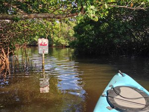Weedon Island Kayak Trail