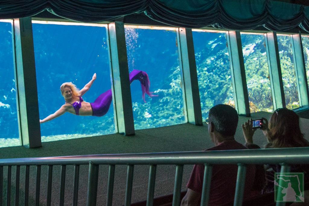 Mermaid Show at Weeki Wachee Springs