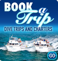 Book A Dive Trip or Charter