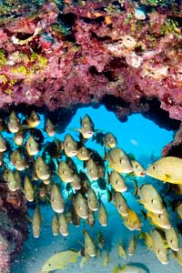 reef-fishes
