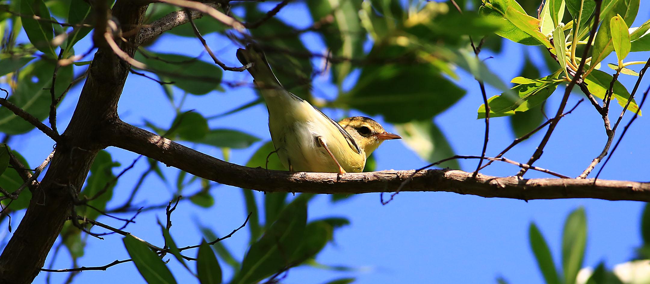 Big Flights Of Song Birds Over The Keys Radar Ground