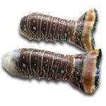 Lobster Tails - Lobstering