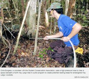 Making Woodrat Habitat